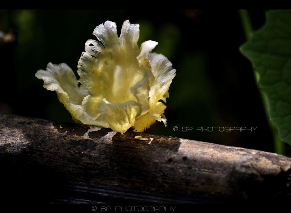   Hidden Flower...   by Sandesh Parab