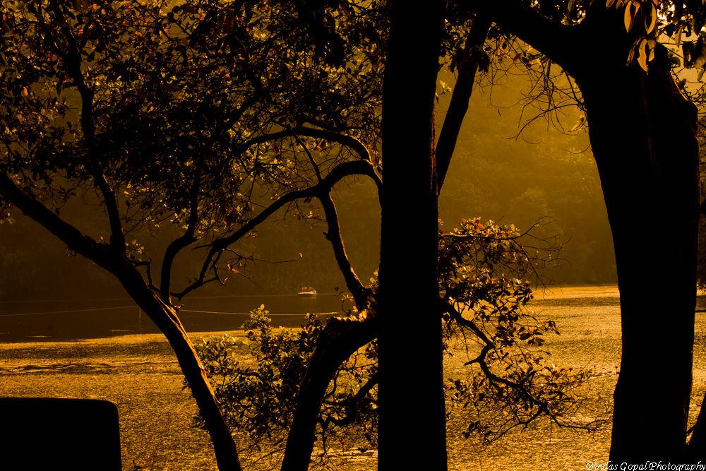 IMG_9628 by Bindas Gopal