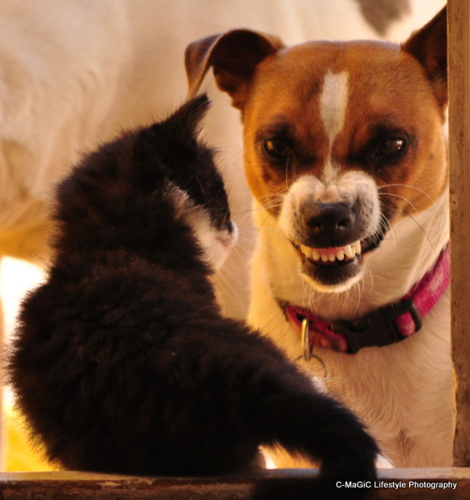 Photo in Random #love #dog #cat #hate #animals #kitten #pets #cape town