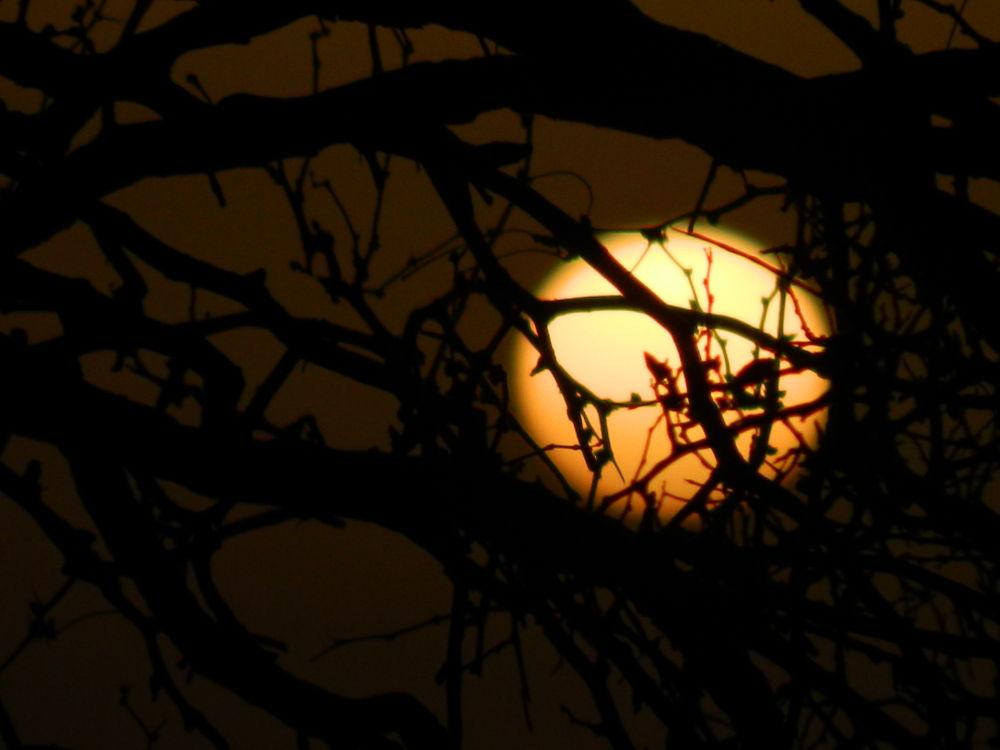 Dusty Sunrise by John Gavin