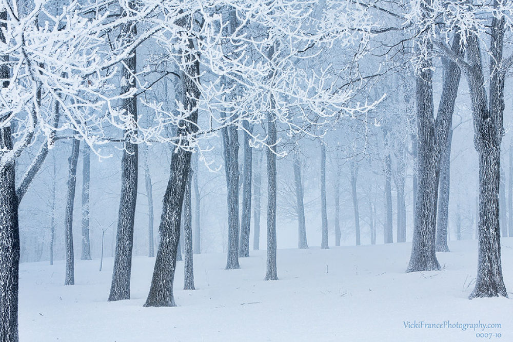 Frosted Twigs by Vicki France by Vicki France
