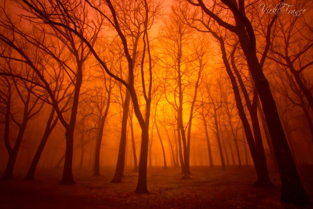 Forest Flames, by Vicki France by Vicki France