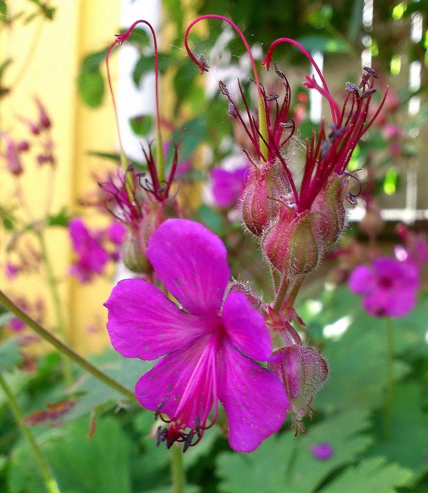 Pink beauty <3 by piafyren