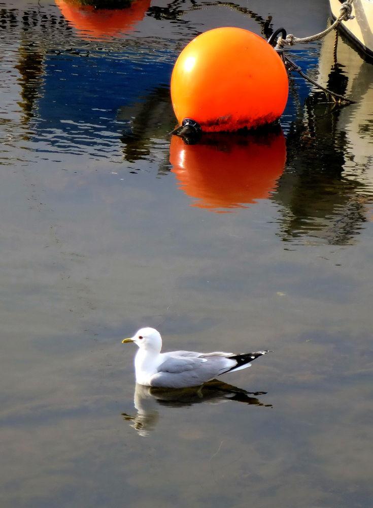 The bird. by piafyren