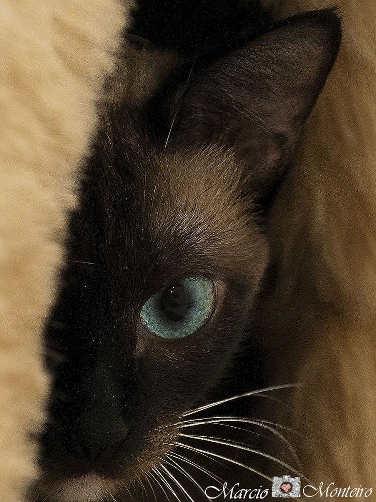 looking shy by MarcioMonteiro