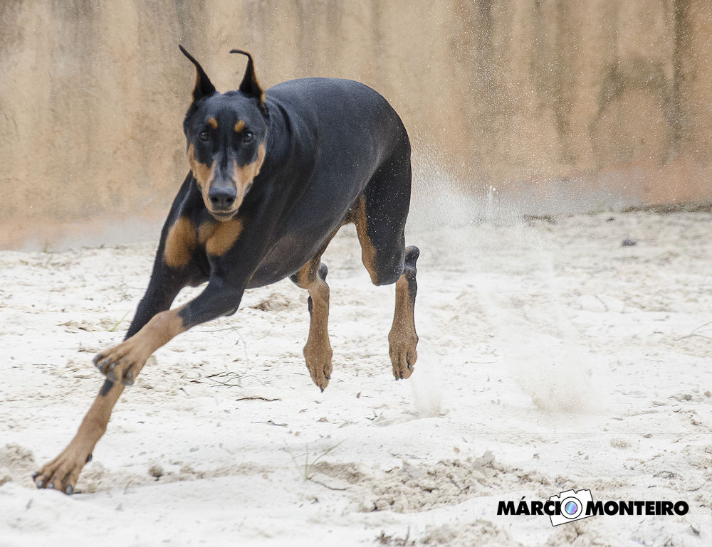 vicious dog by MarcioMonteiro