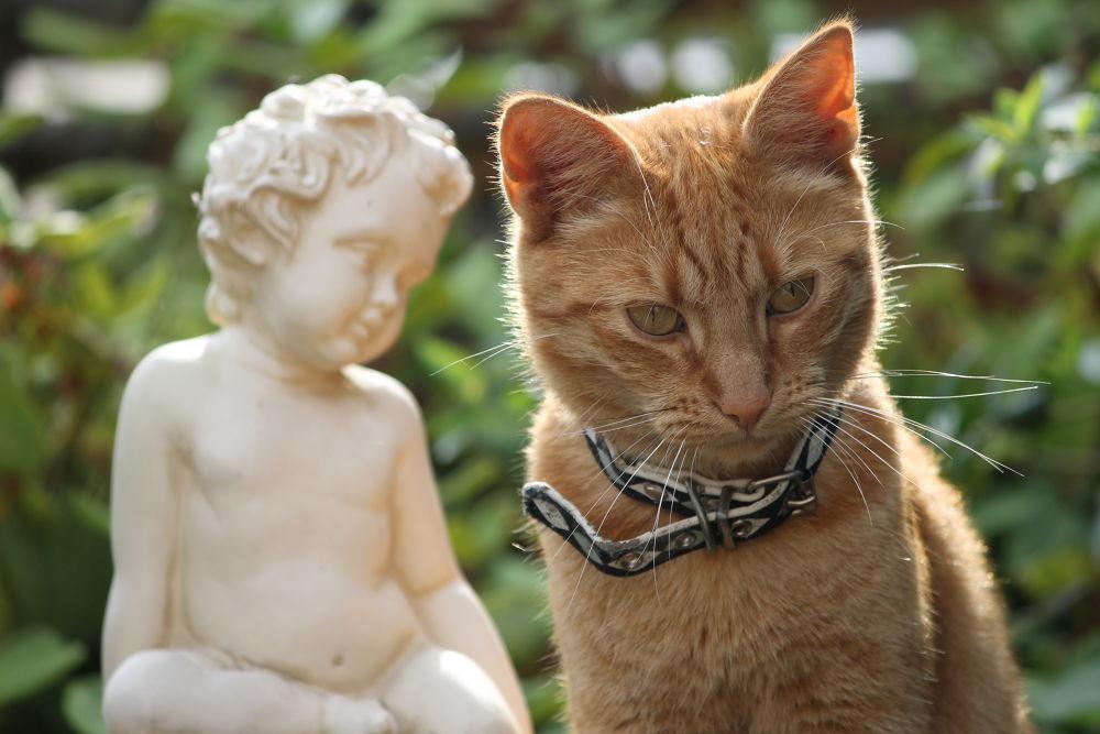 mijn lieve kat by Hillegonda54