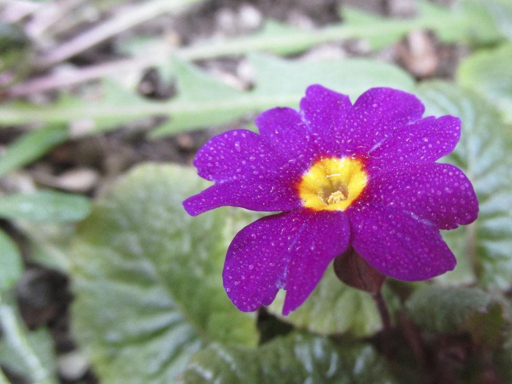 spring flowers  by Ionela Garovat