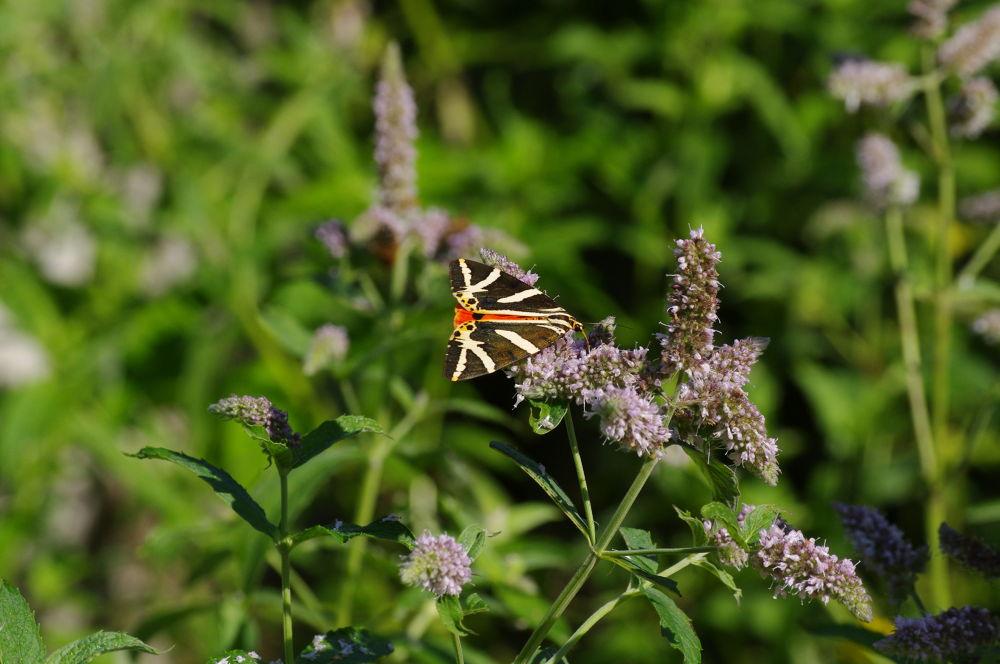 butterflies  by Ionela Garovat