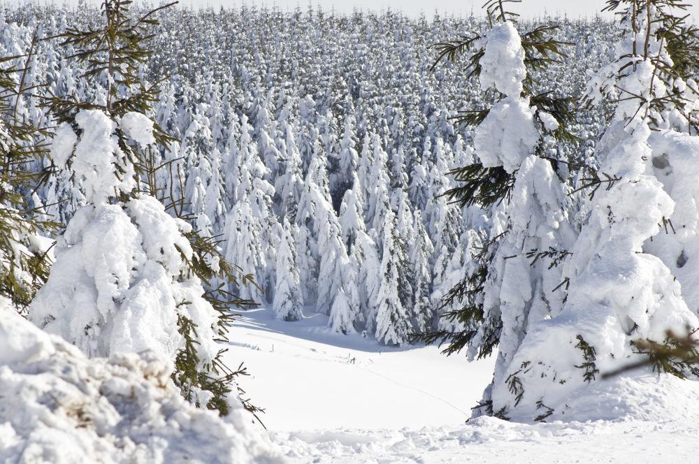winter on the Semenic mountain by Ionela Garovat