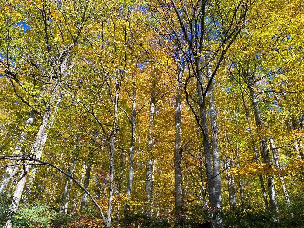 forest by Ionela Garovat