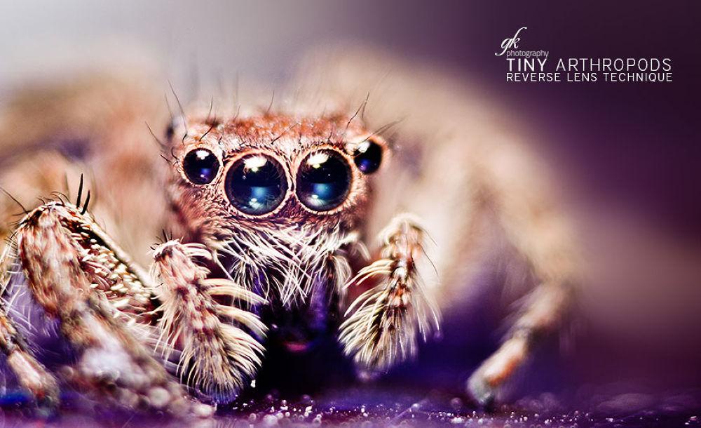 Spider by Gokul