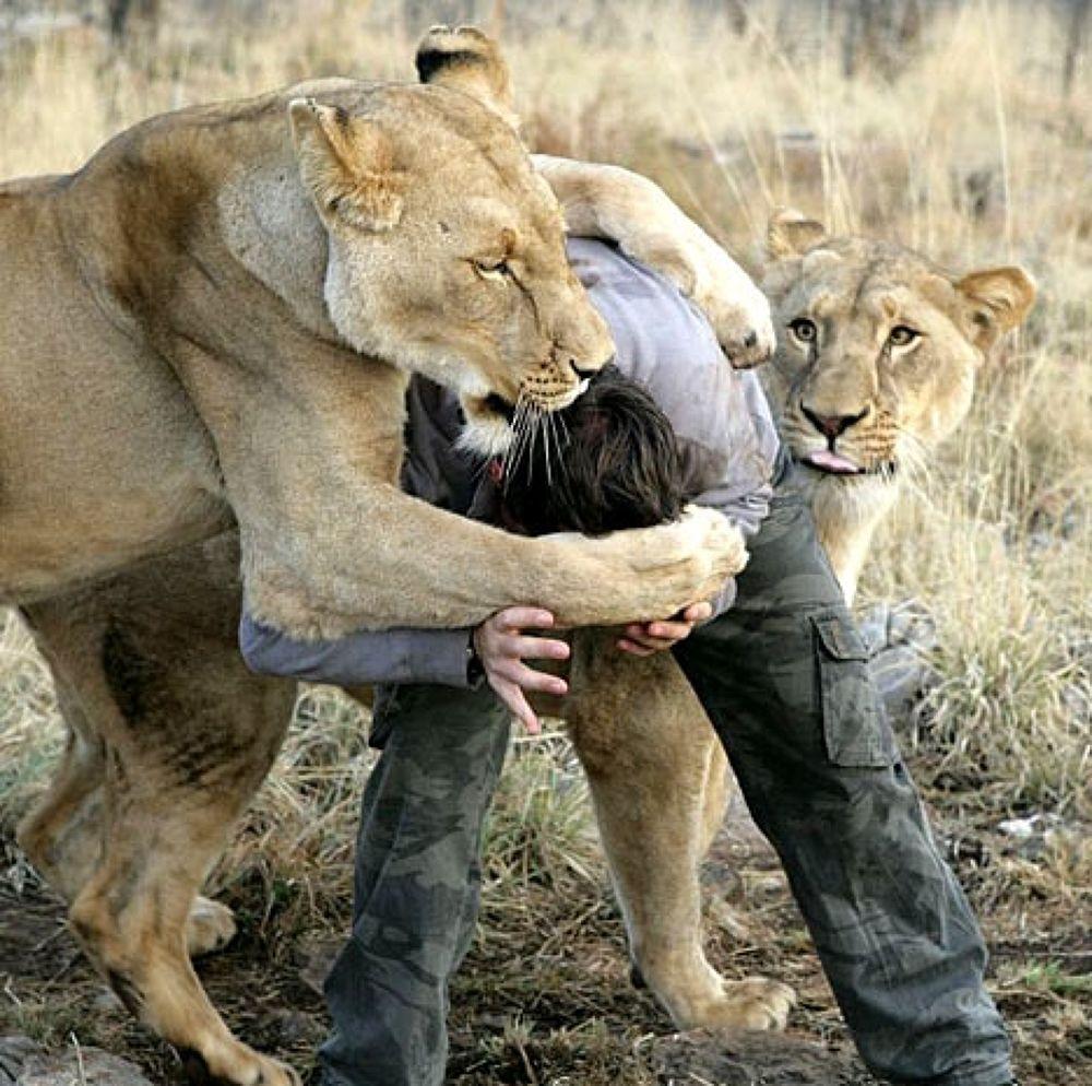 Photo in Random #lion #man #eats