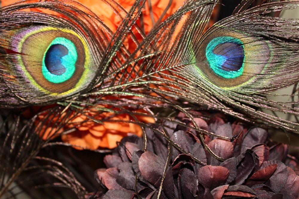 owl owl by sally