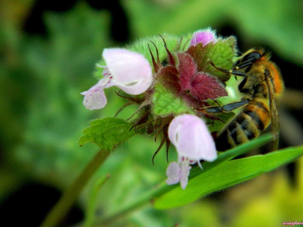Baharla beraber arılar da çıktı piyasaya... by Karadag