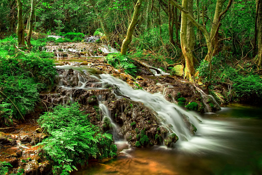 Forest stream by lendames