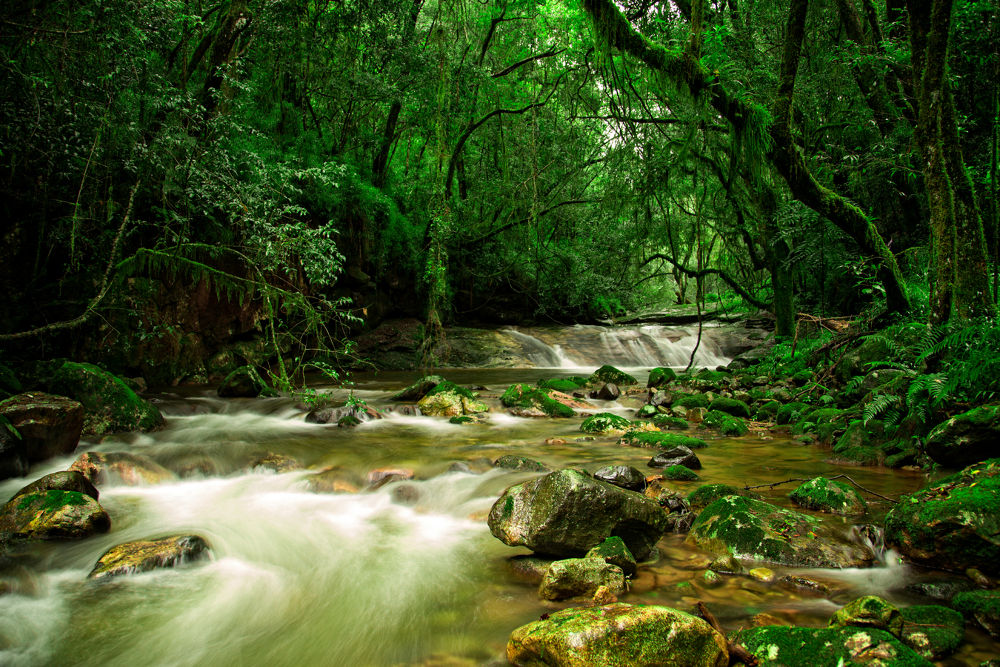 Mountain stream by lendames