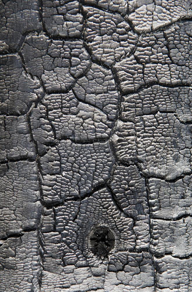burnt log by Dan J Brown
