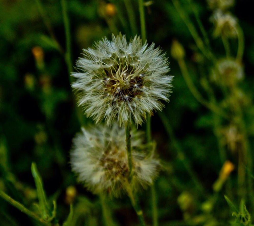 Fairy flower by Cosette Mezher