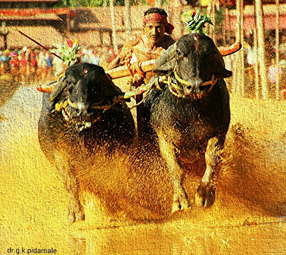 race by Govind Kishor