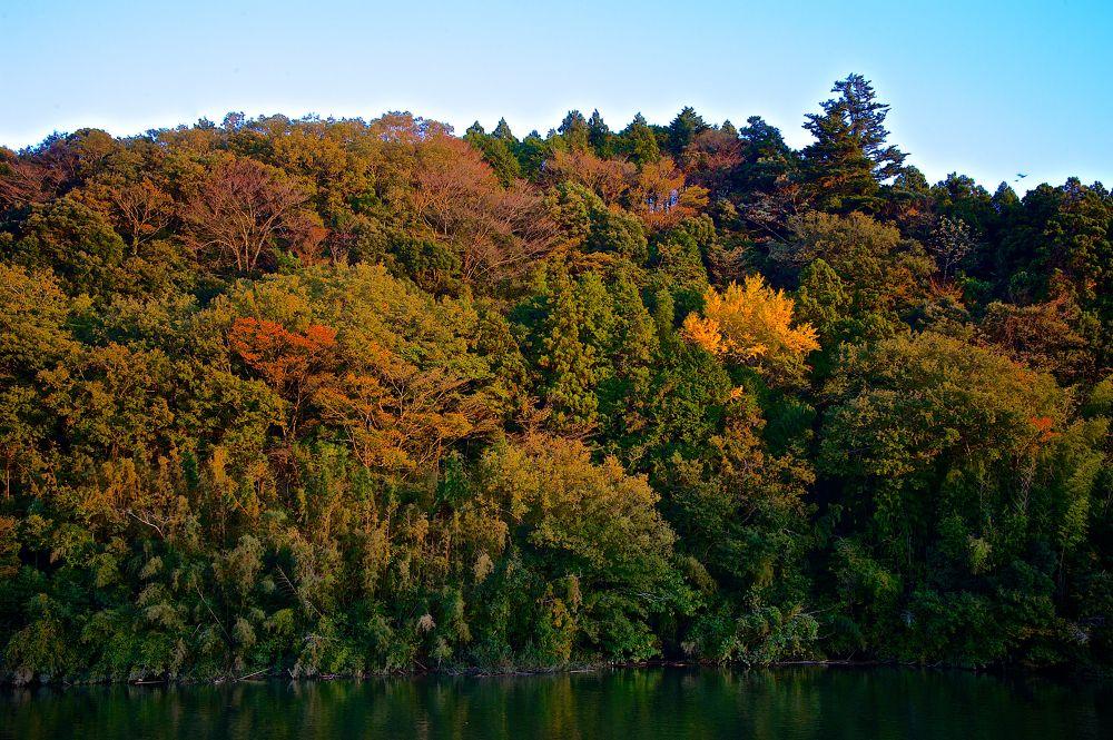 Autumn Color (Lake Kameyama) by matsuzawa