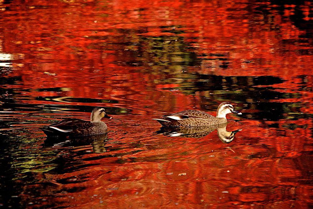Autumn Color by matsuzawa