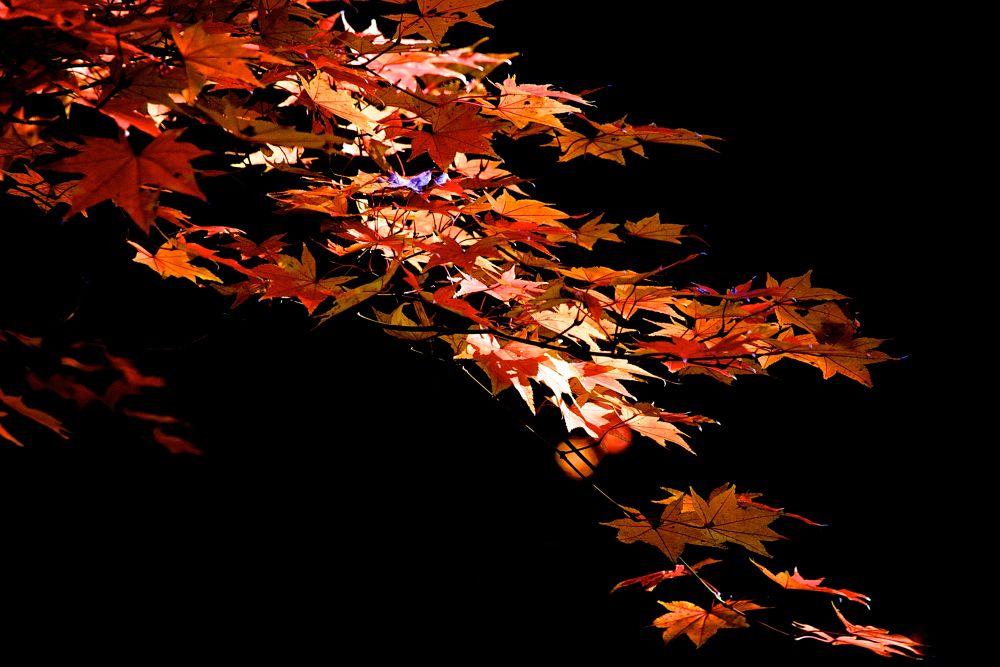 Autumn Leaves by matsuzawa