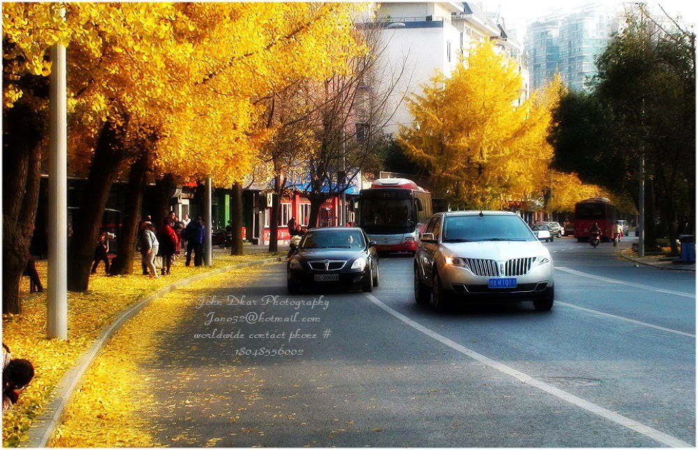 autumn foliage 2013 in Chengdu-015 by JohnDkar