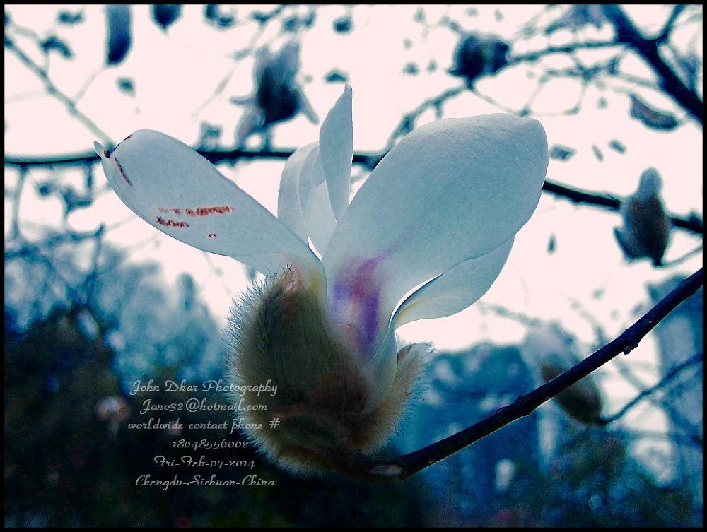 01-sprung spring chengdu 2014 by JohnDkar