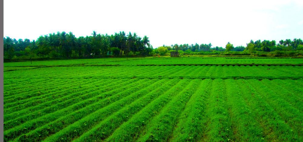 IMG_8653  by K.D.V.Rajaguru Vasudhevan