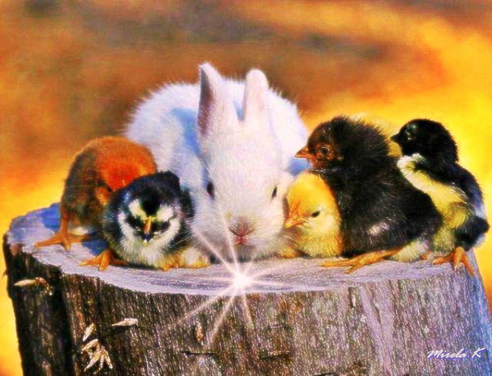 all the little-cute by Mirela Kecanovic