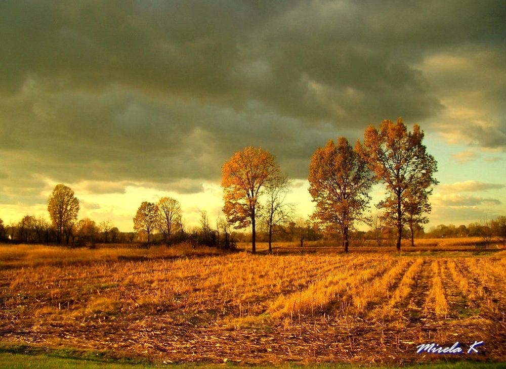 polje kukuruza by Mirela Kecanovic