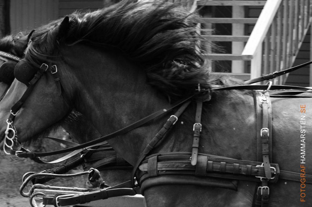 horse by tommytechno