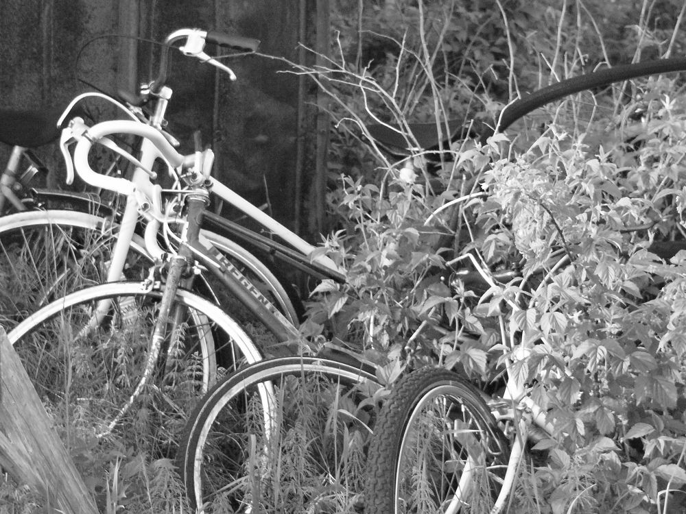 Bicycles by jayrome