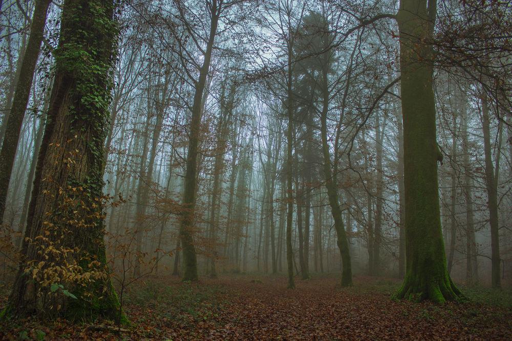 Black Forest SW Germany  by John Palmer