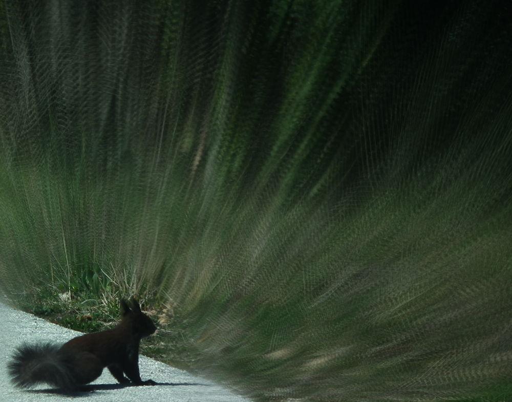 squirrel  by giovanna gobbi