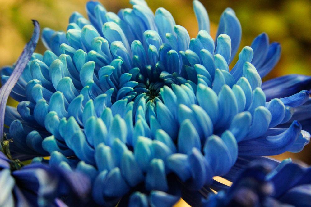 Blue Rhapsody! by KBPic