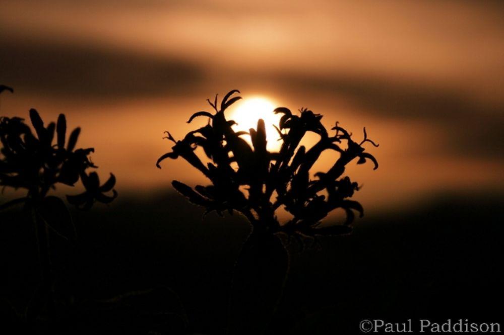 plantsil by Paul Paddison