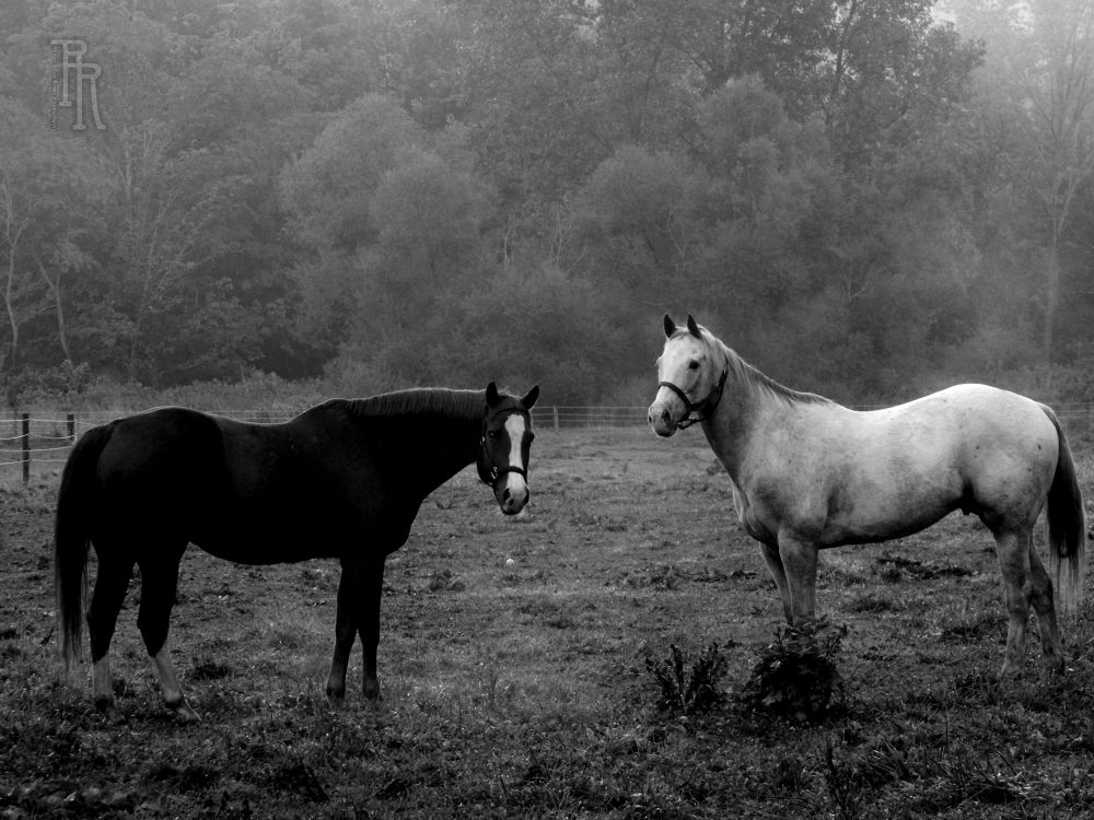 9.15.12-Salt-and-pepper-BW-RR by reneeroma