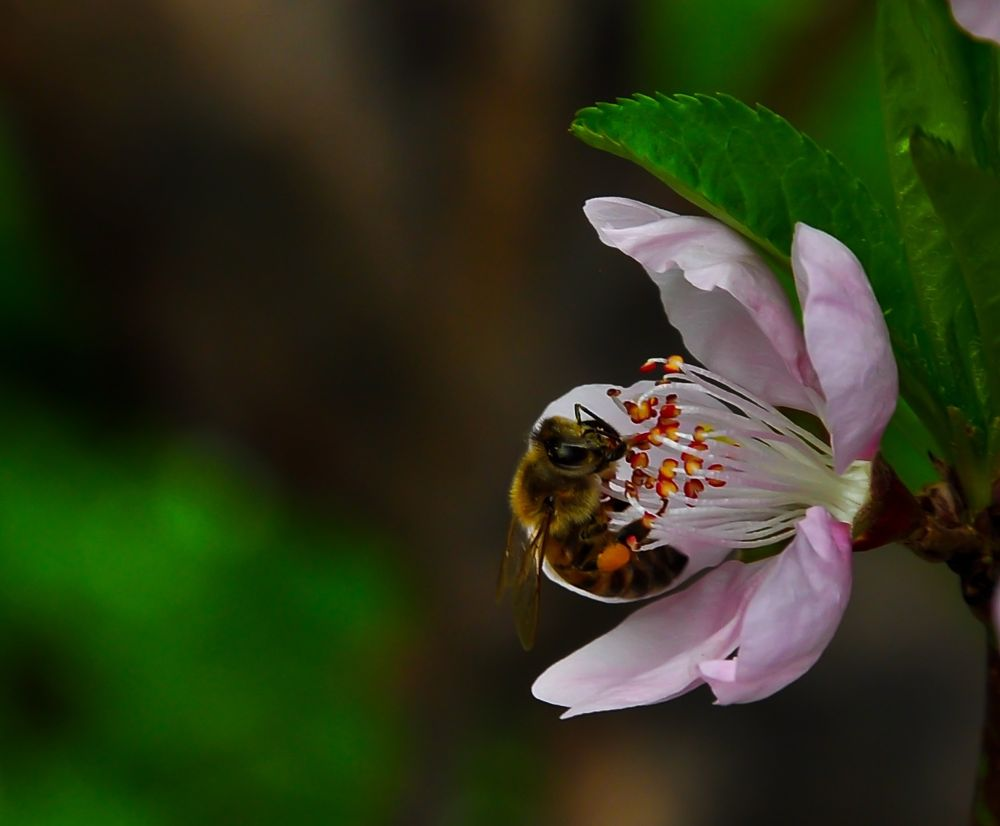 Bee by Paul Abou Khalil
