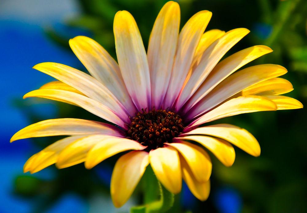 Flower ! by Paul Abou Khalil