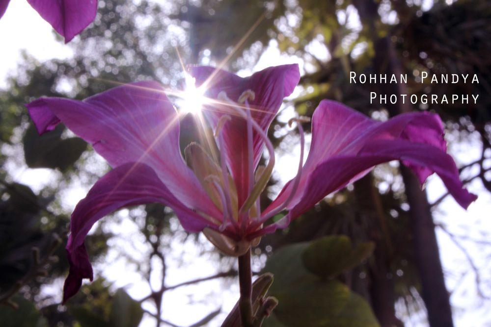 IMG_3821 by rohhanpandya
