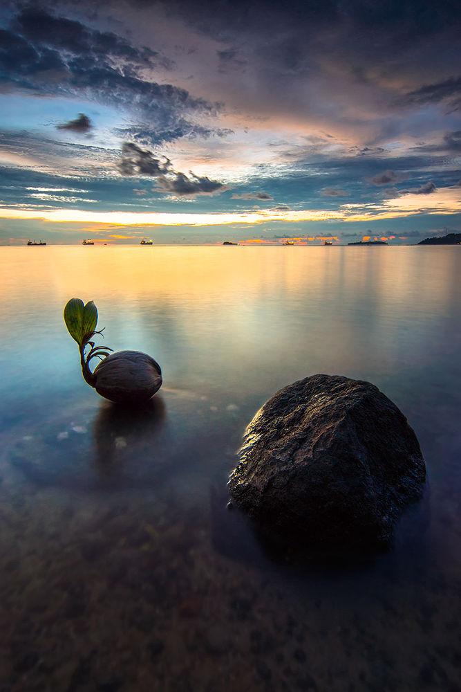Stranded Coconut Seed by AdeNoverzan