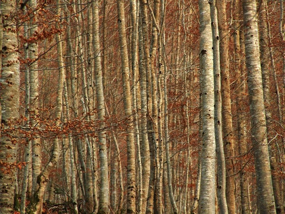wood by Philippe Berthier