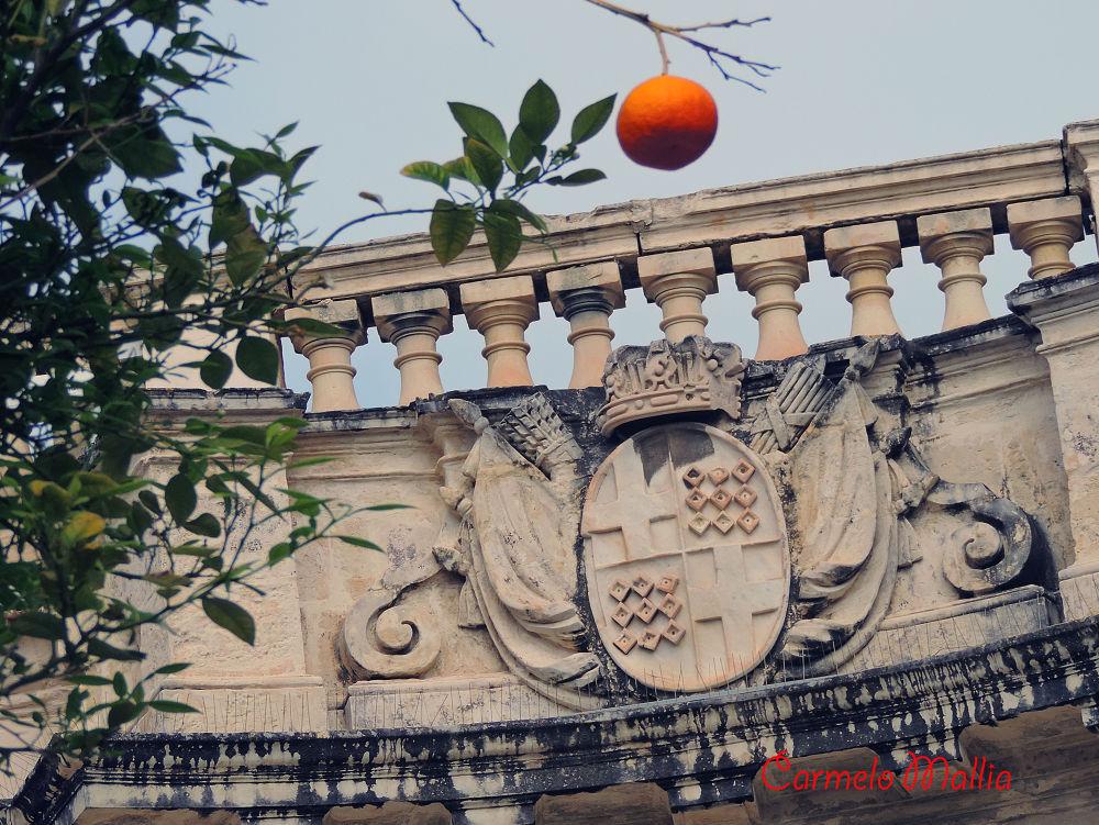 Orange by carmelo