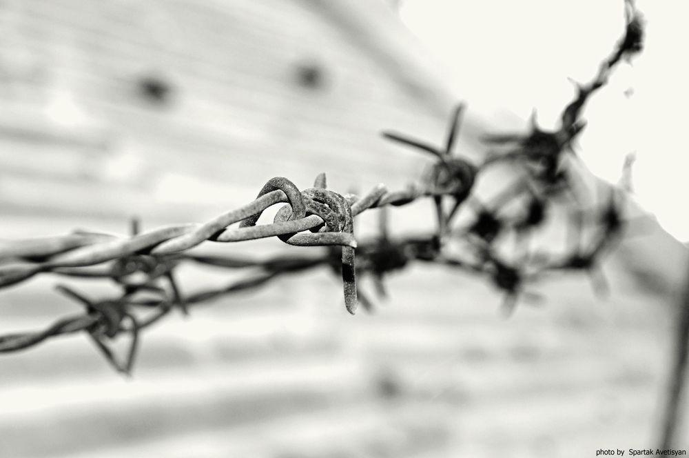 DSC_9295 © by Spartak Avetisyan