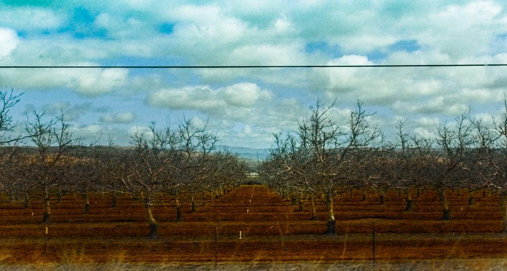 California Landscape by Celeste Holmes