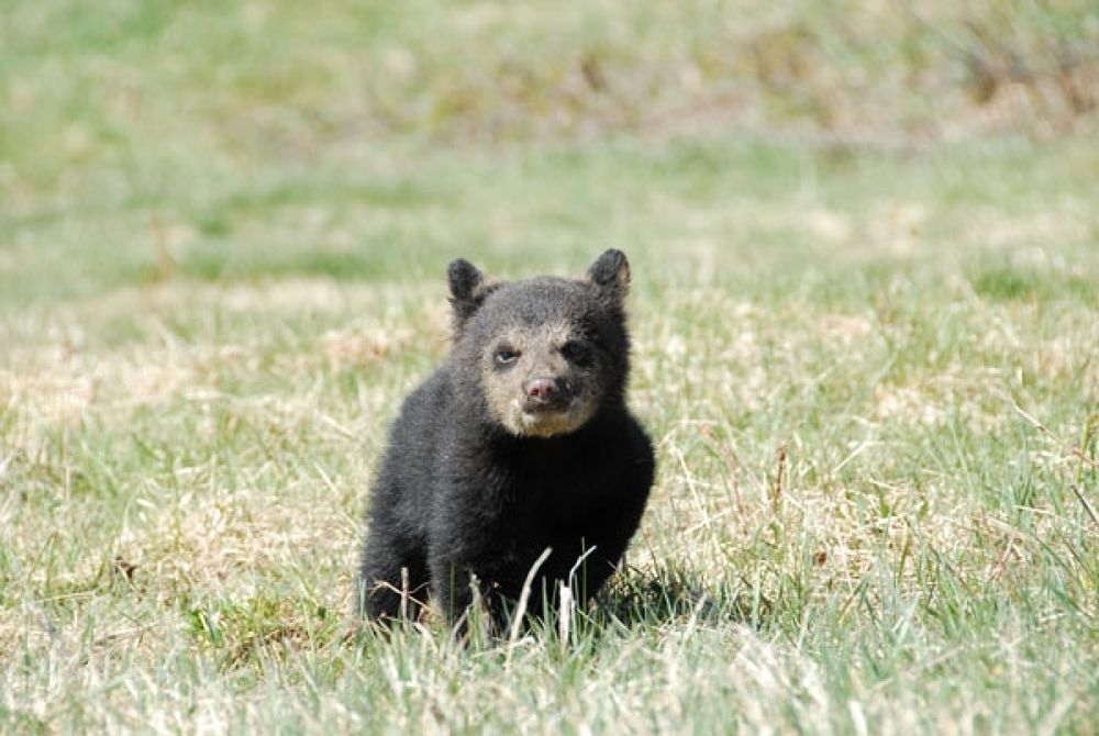 Bear-pics-D200-up-to-April- by bearhelp