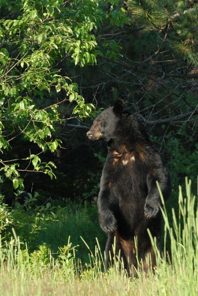 daady-bear-july-2010-b-mjm by bearhelp