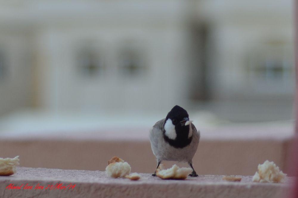 having breakfast 1 by ahmad_abudhabi